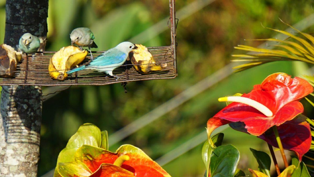 Vögel vor dem Frühstück