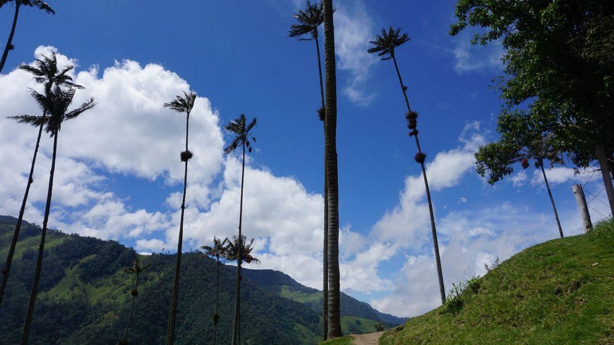Schöne Wanderung im Cocora-Tal