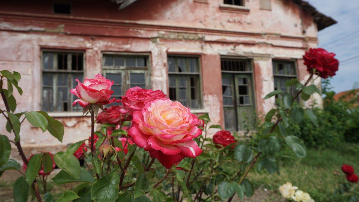 Bulgarien zwischen Blues und Blumen
